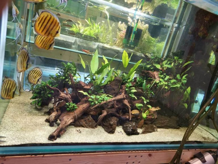 Pet Only South American Wild Tank