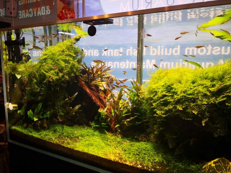 pet only plant display 2