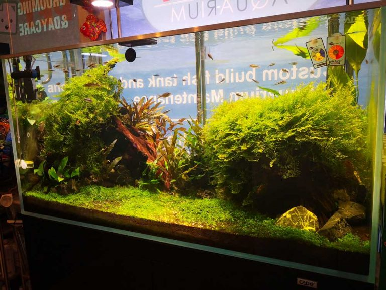 pet only plant display 3