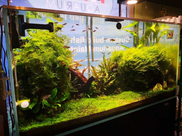 pet only plant display